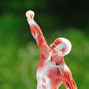 Мышцы в армрестлинге