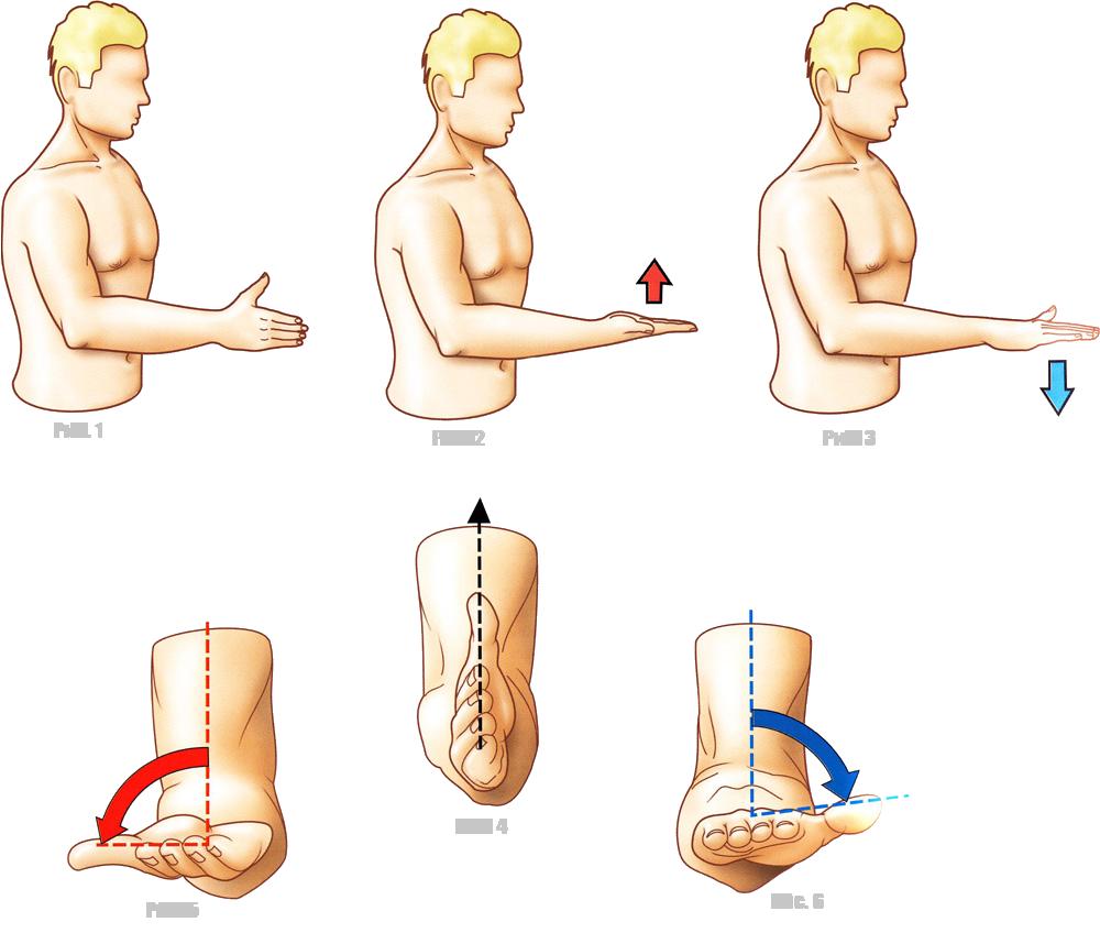 Супинация и пронация кисти